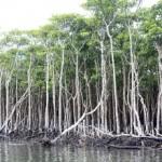 求む!『沖縄の不都合な真実』批判